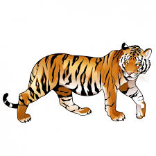 tiger designs collection vector free