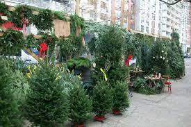 tree store maxresdefault shop