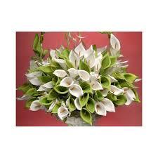 fleur de mariage fleur mariage arum dragée sur tige promo mariage et mariage
