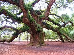 image big tree jpg animal jam clans wiki fandom powered by wikia