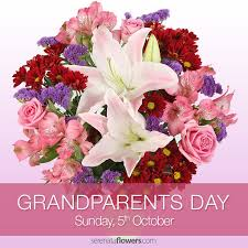 next day delivery flowers 45 best gerberas images on bouquets nosegay and bellis