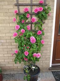 14 best plants images on pinterest gardening flower gardening