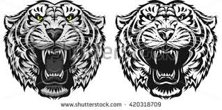 tiger teeth stock images royalty free images vectors