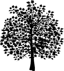 White Oak Tree Drawing Top 10 Oak Tree With Roots Silhouette Courseimage Image
