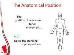 Human Anatomy Planes Of The Body Planes U0026 Axes