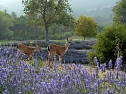 types of native plants types of lavender hgtv