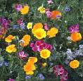 Renee's Garden Seeds Scatter Gardens: Carefree Wildflowers ...