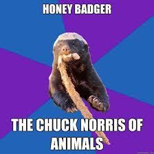 Honey Badger Memes - honey badger norris meme troll face rage comics viral humor funny t