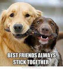 Cute Best Friend Memes - 55 best friendship quotes images on pinterest picture quotes