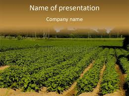 rows of potato plants scotland may 2005 powerpoint template id