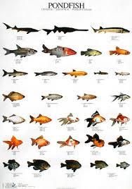 keulen pondfish jpg