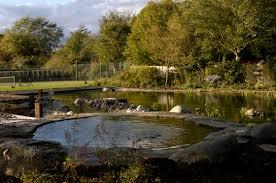 Natural Pools by Japanese Swimming Pool Home Designs Zimbio Jardin