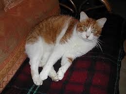 eviter griffe canapé eviter griffe canapé awesome loisirs le topic des chats et des