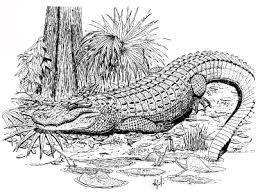 alligators extension