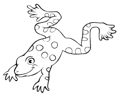 frog life cycle coloring sheet activities colouring pages sheets