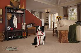 What Is Stainmaster Carpet Made Of Stainmaster Platinum Collection Carpet Lifetime Limited Warranty