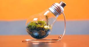 how to make a tiny terrarium in a light bulb sia magazine