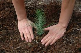 online sources for nursery tree purchase and delivery