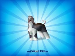 afghan hound dog images cartoon dogs images afghanhound hd wallpaper and background photos