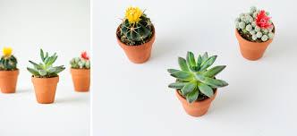 mini plants mini makeover mini plants basic wood shelf hk in love