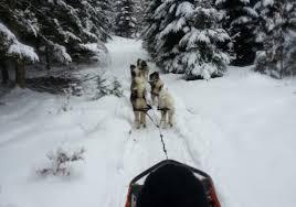 Wetter Bad Herrenalb 7 Tage Hundeschlittenfahrt Ab 46 U20ac Schlittenfahren Wie Die Inuits