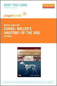 Dog Anatomy Book Miller U0027s Anatomy Of The Dog Elsevier Ebook On Vitalsource