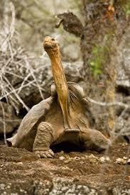 Turtle Planter 576 Best I Like Turtles Images On Pinterest Animals Sea