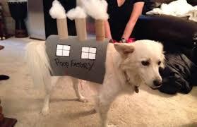 american eskimo dog calgary photos fabulous halloween costumes for your pet