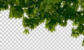 tree trees texture background images pictures
