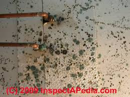 black light mold detection what does black mold look like toxic black mold growth