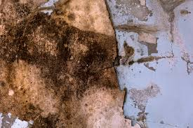 what are the dangers of mold in a basement livestrong com