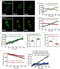 ankyrin b is a pi3p effector that promotes polarized α5β1 integrin