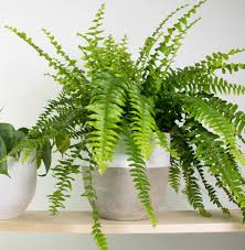 5 indoor plants for low light on the danforth