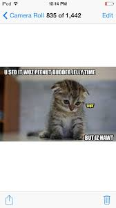 Sad Kitty Meme - 19152 best funny cat images on pinterest funny animals funny
