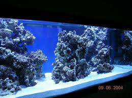 Floating Aquascape Reef2reef Saltwater And Reef Aquarium Forum - reef aquascaping startpage picture search reef tank
