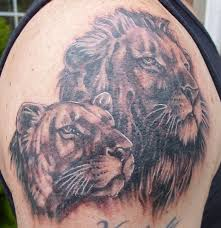 images female lion tattoo drawing
