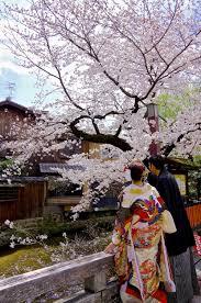 Cherry Blossom Map Kyoto Gion Shirakawa Street Kyoto Japan Travel Tourism Guide