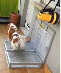 bagno per cani aramissulwater jpg