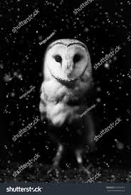 owl halloween background barn owl winter portrait dark snow stock photo 531393319