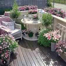 pflanzen fã r den balkon die besten 25 blumen ideen auf blumen rosafarbene