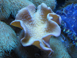 sea plants white bottom sea animals mix