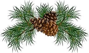 white pine cone cone png