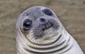Seal Meme Generator - that awkward moment sealion blank meme template memes
