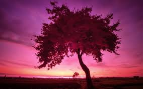 sunset lonely part nuernberg purple sunset nature tree wallpaper