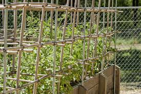 Bamboo Cucumber Trellis Vertical Gardening For Healthier Vegetables U0026 Fruit Organic