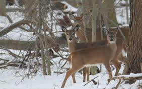 deer u2013 rutgers master gardeners of mercer county
