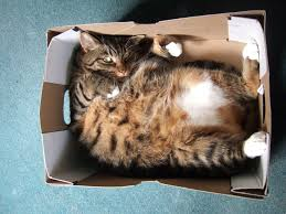 20 of the funniest pictures of cats in boxes