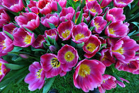 Flowers In Hanover Pa - 100 flowers in hanover pa find out what is new at your