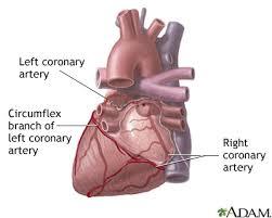 Heart Anatomy Arteries Posterior Heart Arteries Medlineplus Medical Encyclopedia Image