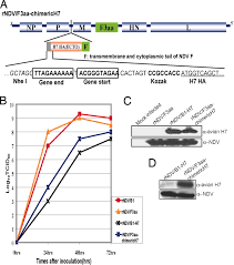 engineered viral vaccine constructs with dual specificity avian